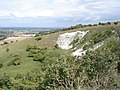 Chalk pit on the north side of Malling Hill - geograph.org.uk - 2342525.jpg