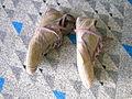 Chaussure perdues dans un aeroport.JPG
