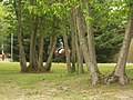 Cheval au Cadre noir - panoramio.jpg