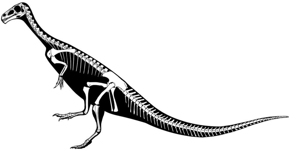 Chilesaurus skeleton