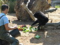Chimpanzee feeding time - Lagos Zoo - The Algarve, Portugal (1736465728).jpg