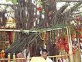 Chintpurni Devi (10).JPG