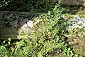 Church of St Nicholas, Ash-with-Westmarsh, Kent - barrel tomb ivy, moss and weeds.jpg