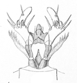 Cicindela hybrida larva6.png