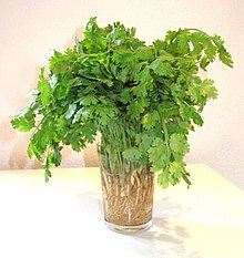 Dried Cilantro (Coriander Leaves)