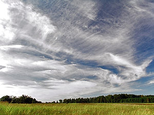 A photograph showing many types of cirrus clouds all jumbled together floating above a plain