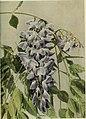 Climbing plants (1915) (20034272344).jpg