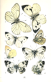 Colemans British Butterflies Plate IV.png