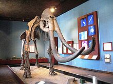 Mammoth skeleton at the Regional Museum 4e6b18d00d3