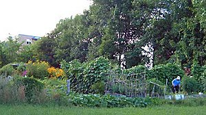 Community gardening - Strathcona Heights Community Garden in Ottawa, Canada.