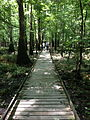 Congaree National Park South Carolina Boardwalk vertical.jpg