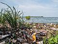 Contaminación en el Lago de Maracaibo, Estado Zulia.jpg