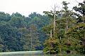 Cooks Lake (5494812678).jpg
