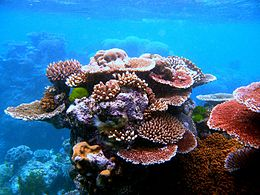 A colourful underwater photograph of a variety of corals