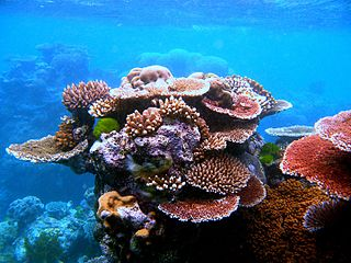 Coral reef protection Modifying human activities to reduce impact on coral reefs.