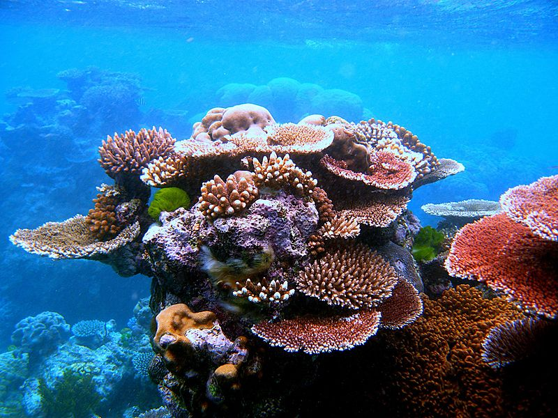 see: Great Barrier Reef
