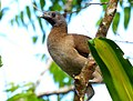 Costa Rica DSCN2363-new (30762133870).jpg