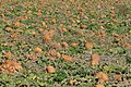 Courges Haute-Provence-P2110980.jpg