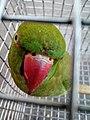 Crazy parrot.jpg