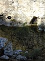 Csókavári-barlang 8.jpg