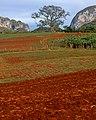Cuba 2013-01-24 (8518126806).jpg