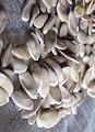Cucumis melo - Диня - Насіння.jpg