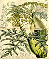 Curtis's botanical magazine (Tab. 5168) (9444618364).jpg