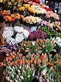 Cvijece na trgu Petra Preradovica Zagreb 15012012 2.jpg