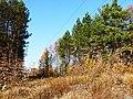 Dąbrowa Górnicza (Rudy) las koło majątku Dobieckich - panoramio.jpg
