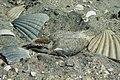 DOC Fairy Tern photos 10.jpg