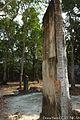Damaged Maya Stela at Calakmul Mexico 12.JPG