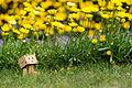 Danbo enjoying spring (8699572037).jpg