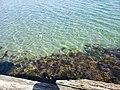 Dancing Seaweed 2.jpg
