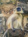 Daulatabad, Aurangabad - panoramio (25).jpg