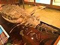 Desmatosuchus Exhibit Museum of Natural History 02.JPG