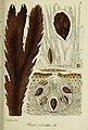 Deutschlands flora in abbildungen nach der natur (1832) (20701496460).jpg