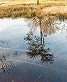 Diakonievene. Natuurgebied van It Fryske Gea 06.jpg