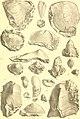 Die Gastropoden des karnischen Unterdevon (1907) (20735545839).jpg