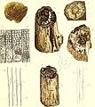 Die fossile Flora der Permischen Formation (1864) (20728290720).jpg