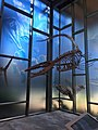 Dinosaur exhibit in the Witte Museum.jpg
