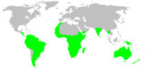 Distribution.idiopidae.1.png