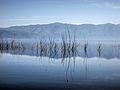 Dojran Lake 219.jpg