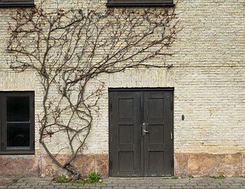 Door and ivy at Viborg Katedralskole.jpg