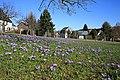 Drebacher Krokuswiesen 2H1A5321WI.jpg