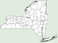 Dryopteris fragrans NY-dist-map.png