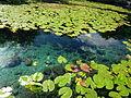 Dzibilchaltún Cenote - P1110789.JPG