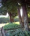 Early Morning, Propect Park, Redlands, CA 7-12 (7644745662).jpg