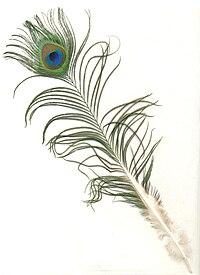 Pauwenveer Wikipedia