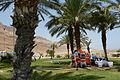 Ein Gedi - in the Dead Sea P1110476 (5912373413).jpg