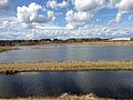 Ekeby våtmark (8774432593).jpg